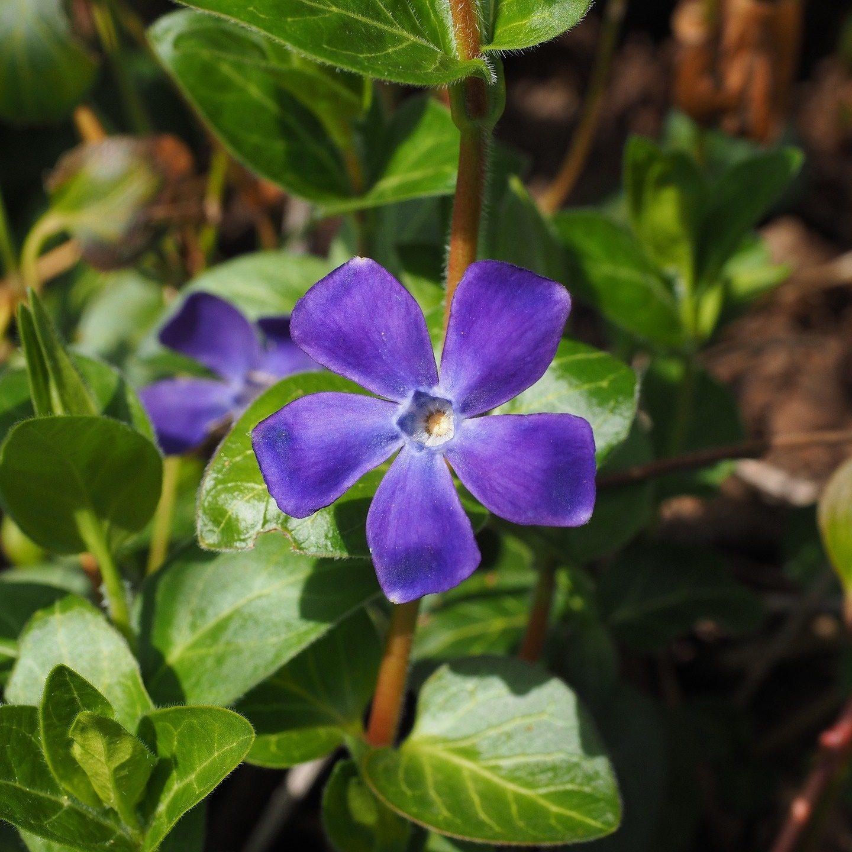 Fête de la biodiversité et du bien-être